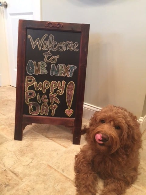 Welcome to Doodle Country Mini Goldendoodles