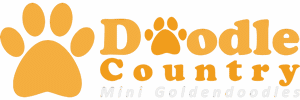 Doodle Country Mini Goldendoodles