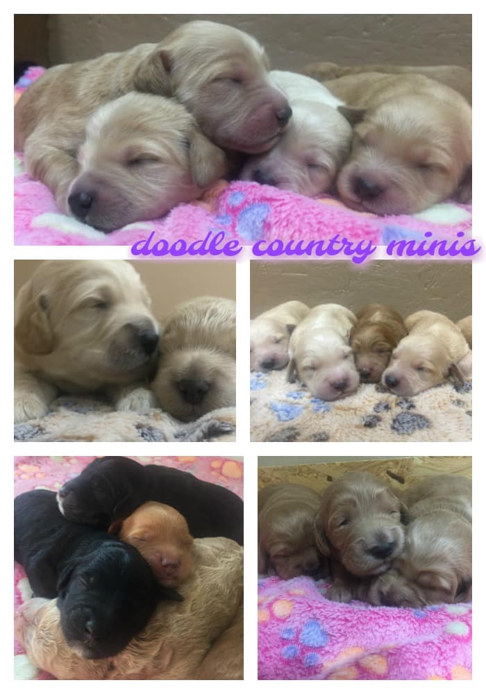 Puppies are Here !!