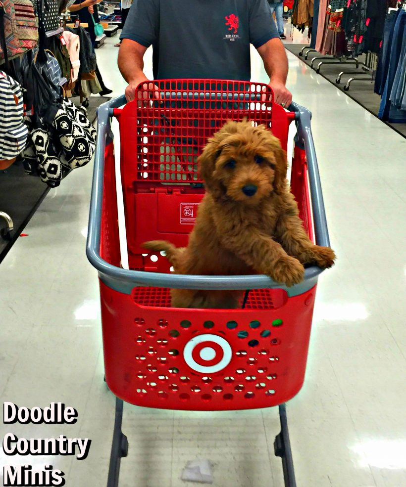 Lucy Does Target !!