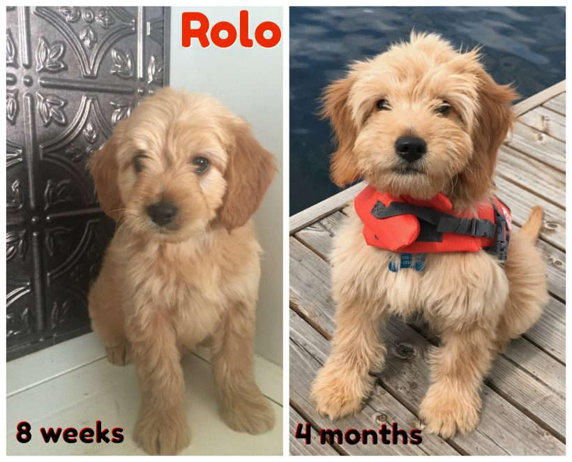 Meet Little Rolo !