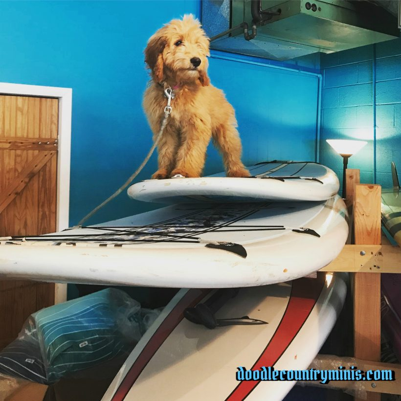 Poppy is ready to paddle board !!