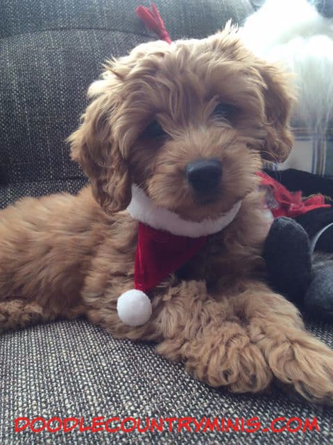 Little Lily is ready to go meet Santa !!