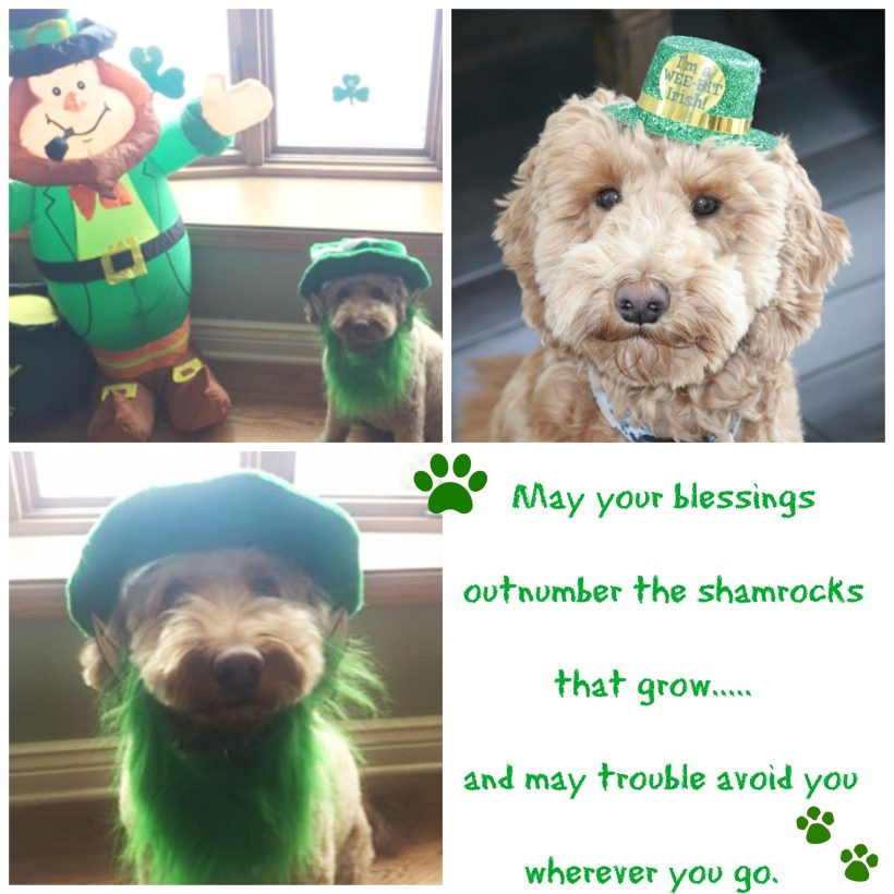 Happy  St Patrick's Day !!!