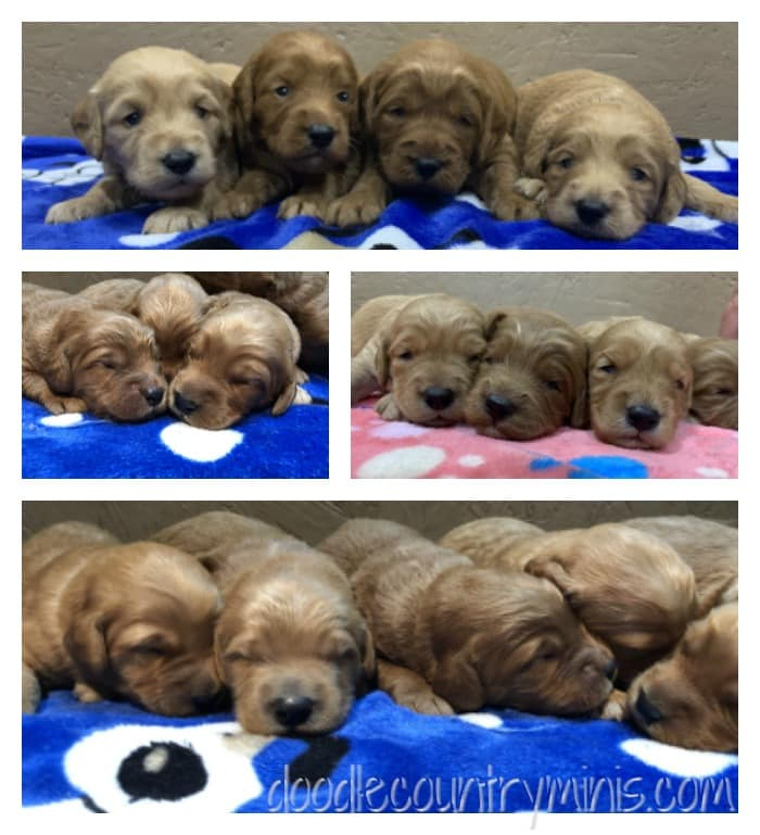 Puppies !!! What a great week we've had watching them grow