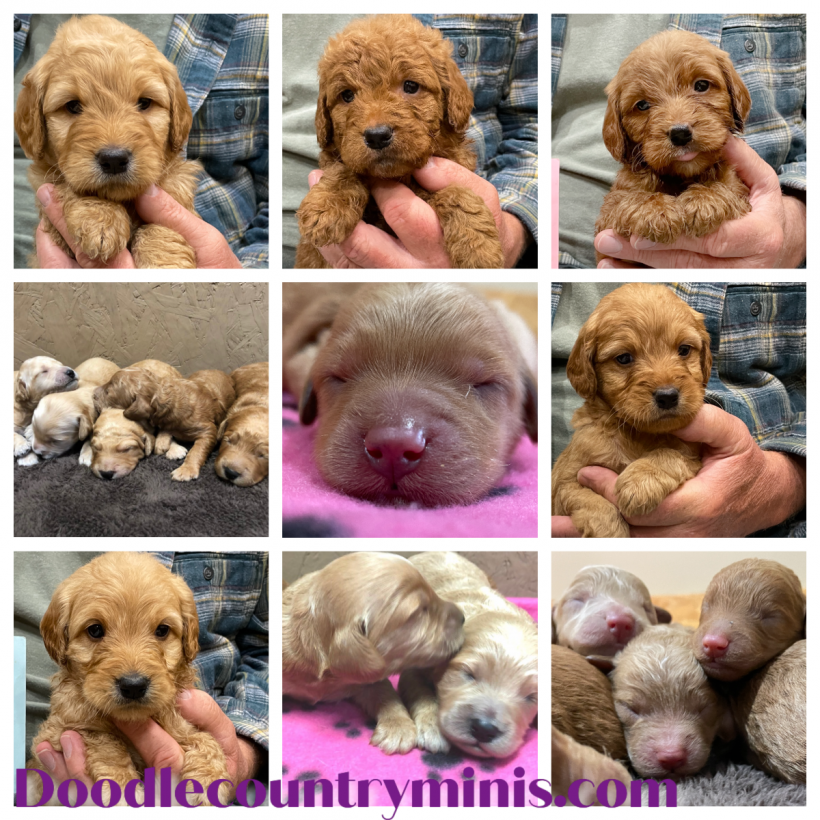 Available Puppies !!!