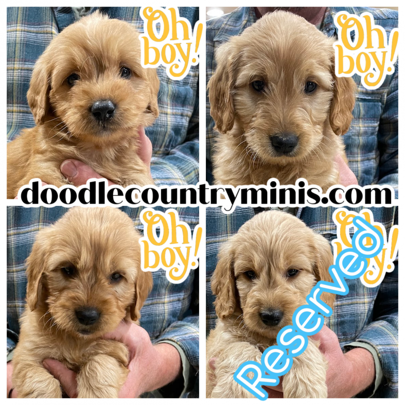 We Have Three Little Boys Available Right Now !!