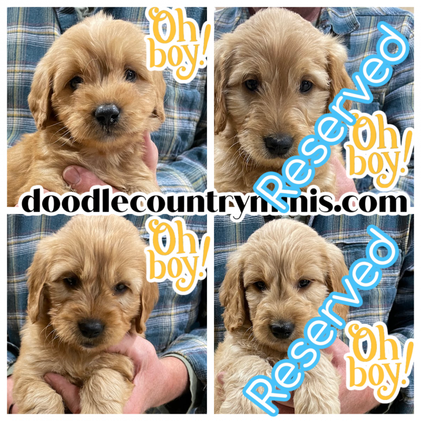 We Have Two Little Boys Available Right Now !!
