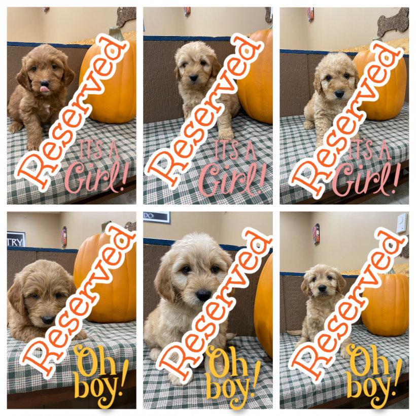 All of Rosie's Are Now Reserved…